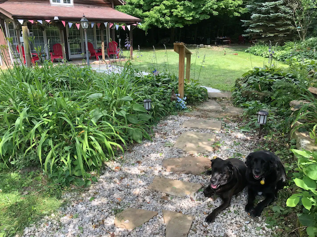 Cabin exterior with two black dogs sitting beside the path to cabin